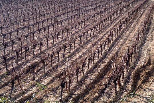 quiet vines 2